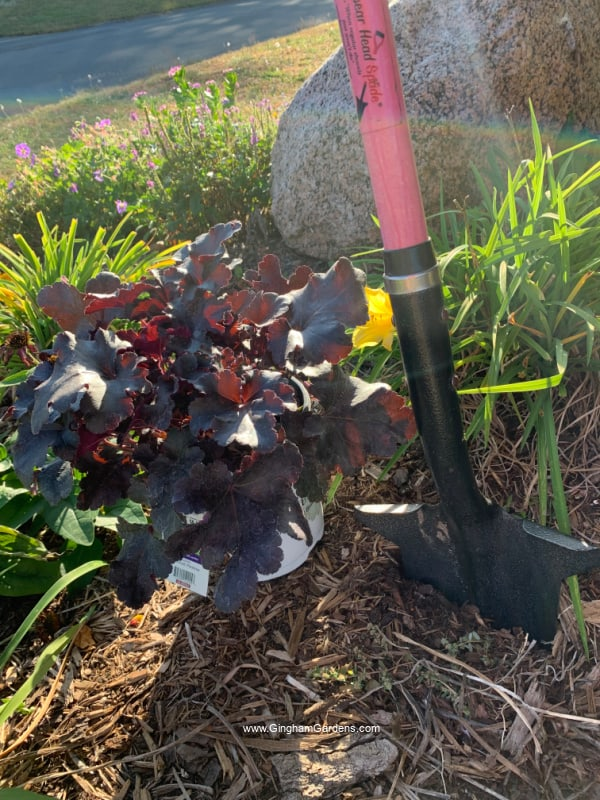 Potted coral bell and shovel in a fall garden