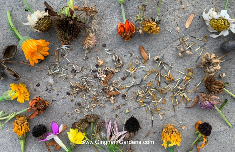 Flower heads s and Seeds