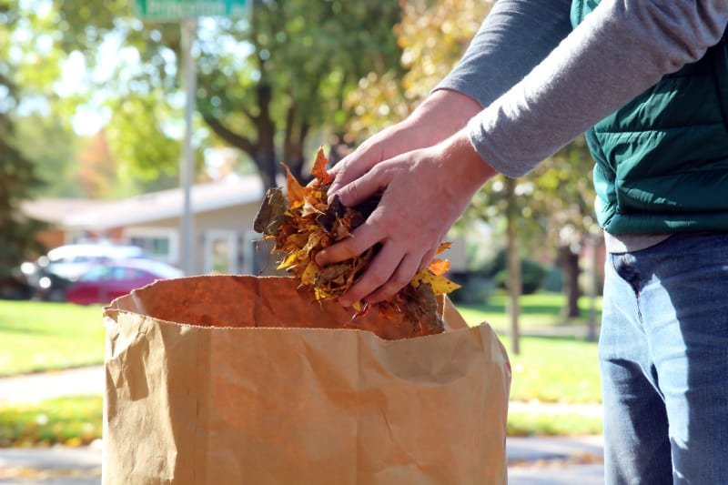 Image of a person's hands cleaning up fall leaves