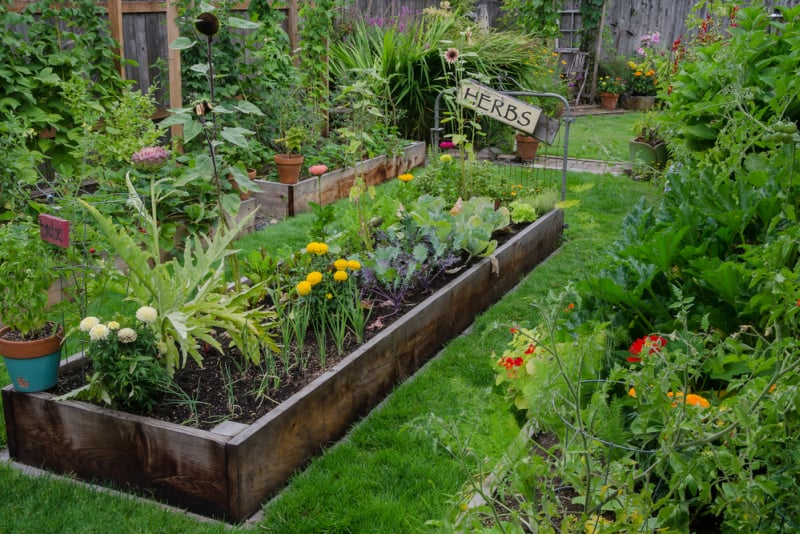 Vegetable Garden in later summer or early fall